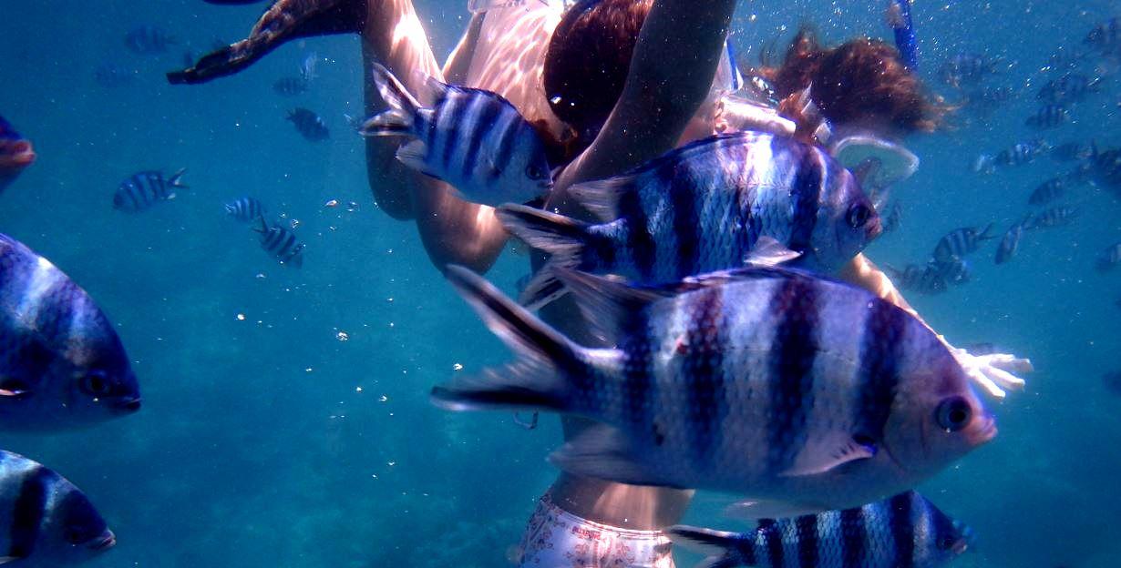 沖縄でお魚と一緒に泳ぎませんか。